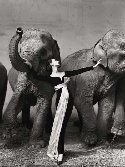 Photo of ثبت گرانترین عکس دنیا به نام «ریچارد اودون»