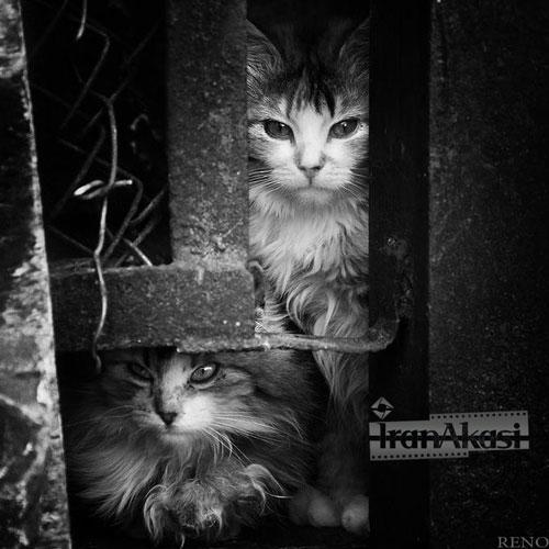 Photo of نمونه های زیبا از عکاسی سیاه و سفید