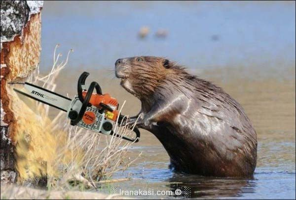 Photo of عکاسی از حیوانات همگام با تکنولوژی